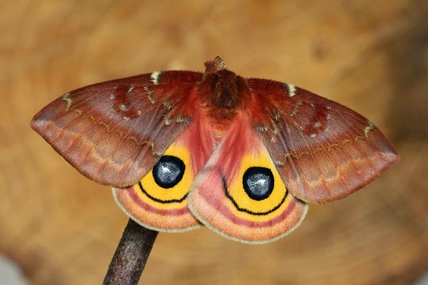 magical-world-of-butterflies-2
