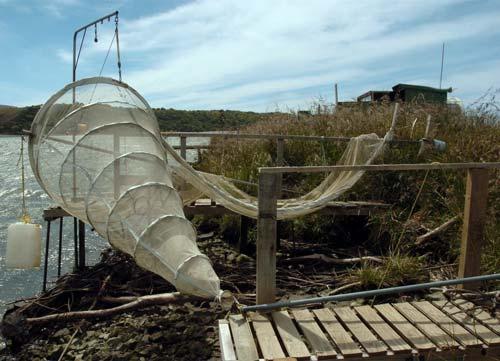 Wood River Kia >> Kia Ora, Aotearoa: The Whitebait Culture