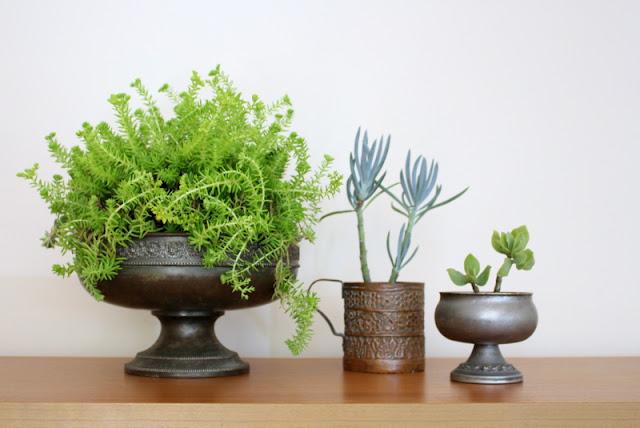 Indoor plants displayed in vintage metal planters