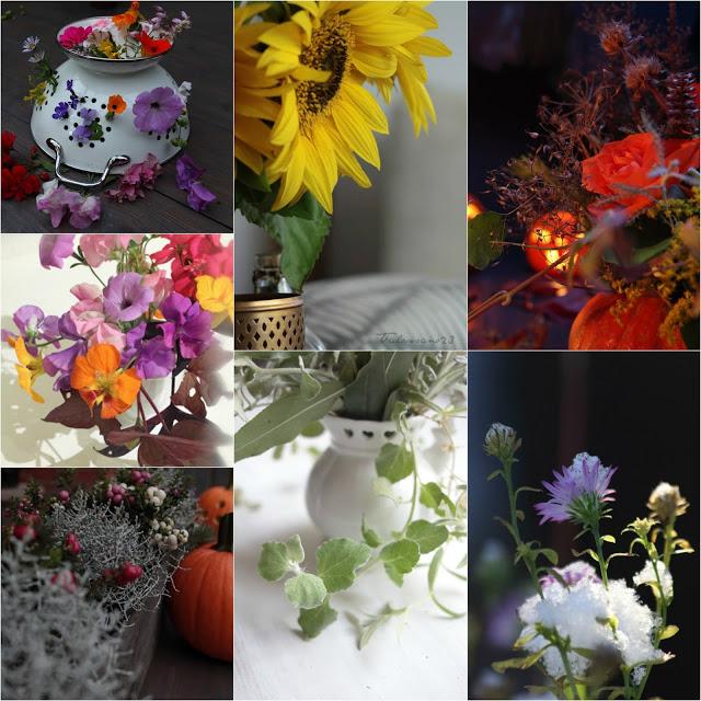 #kukkailottelu, valokuvakollaasi
