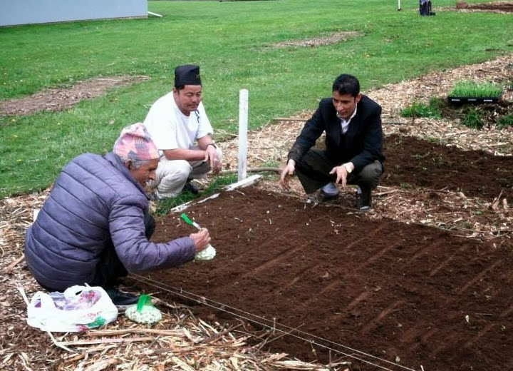 Craigslist Tri Cities Wa Farm And Garden | Gardening: Flower and
