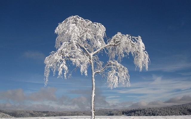 karlı ağaç