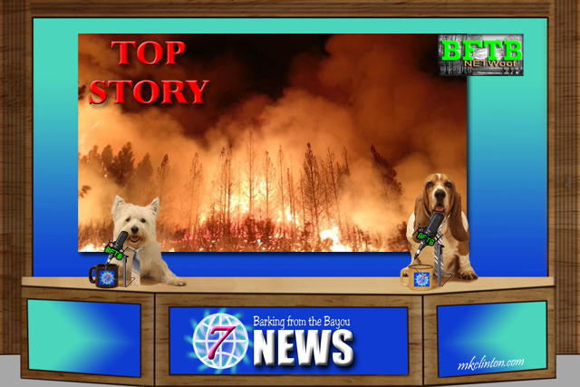 Two dog news anchors
