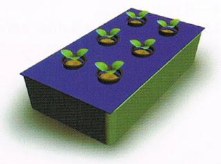 membuat-tanaman-hidroponik-sederhana