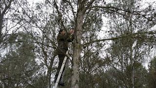 colocación cajas nido