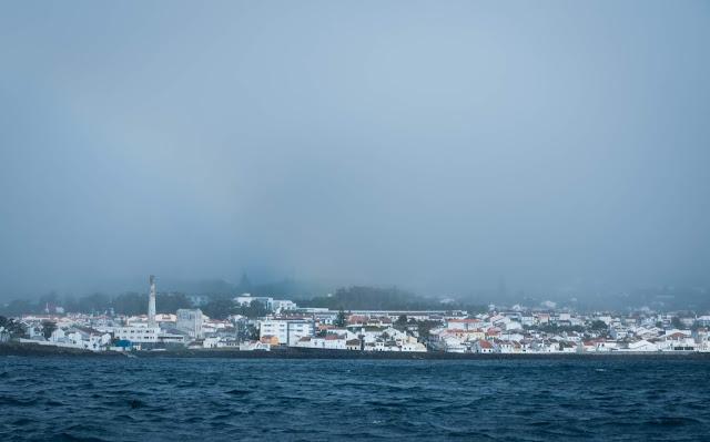 Whale watching with Picos de Aventura; São Miguel, Azores