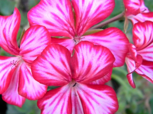 kwiaty na działce, ogród