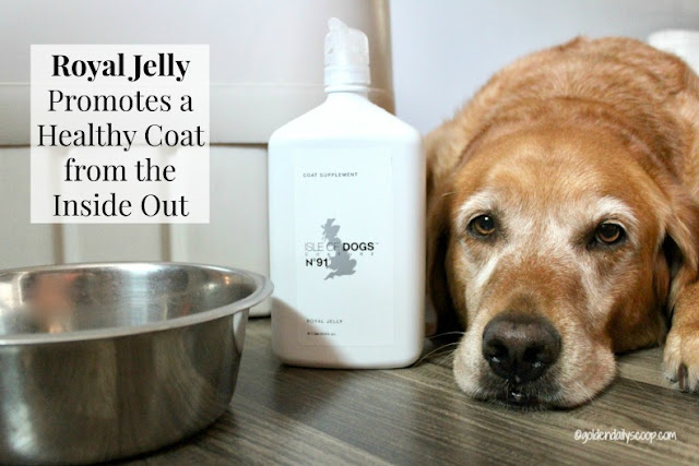 royal jelly supplement to help fight shedding in dogs