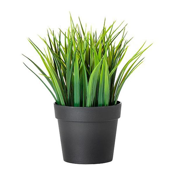 Planta FEJKA