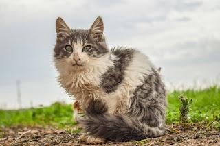 Tanda Tanda Kucing yang Stres