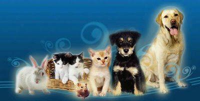 Nuestras mascotas. Un conejo, tres gatos, dos perros y un hamster
