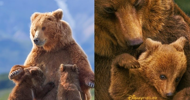 "Bonggamom Finds: Disneynature's new film, ""Bears"" opens ..."