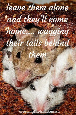 leave them alone and they'll come home.... wagging their tails behind them