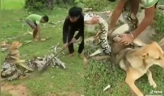 Η τρομακτική μάχη τριών αγοριών με βόα για να σώσουν έναν σκύλο (Βίντεο)