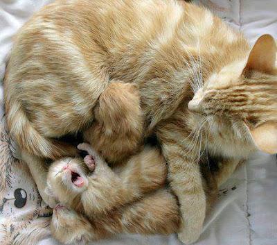 gatinhos mamãe e filhotes