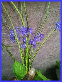 É uma erva utilizada popularmente para tratar problemas de fígado e de garganta.