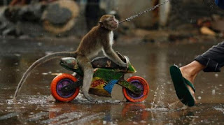topeng monyet naik motor