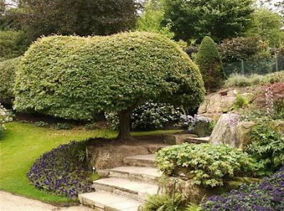 Декоративный сад, планировка