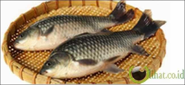 Makan ikan