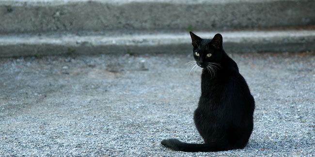 Beberapa Hewan Yang Dipercaya Bisa Melihat Hantu