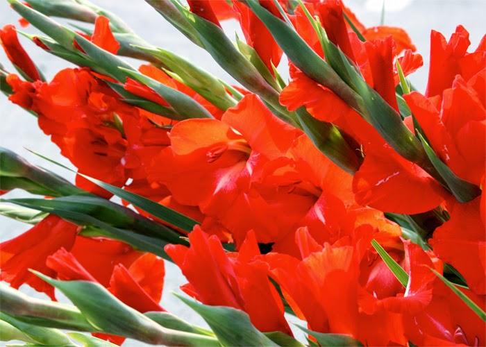 Những Đóa Hoa Thường Cắm Trong Gia Đình Ngày Tết 3