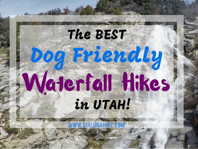 The Best Dog Friendly Waterfalls Hikes in Utah