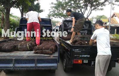 jual ijuk aren black palm fiber di jakarta,depok,bogor,tangerang