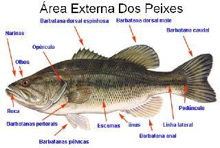 Foto das areas externas dos peixes