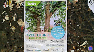 Poster: Junction Tree Tour and Tree Care Tips at the Junction Solstice Festival