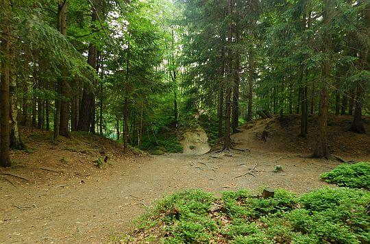 Las przy Jeziorku Błękitnym.