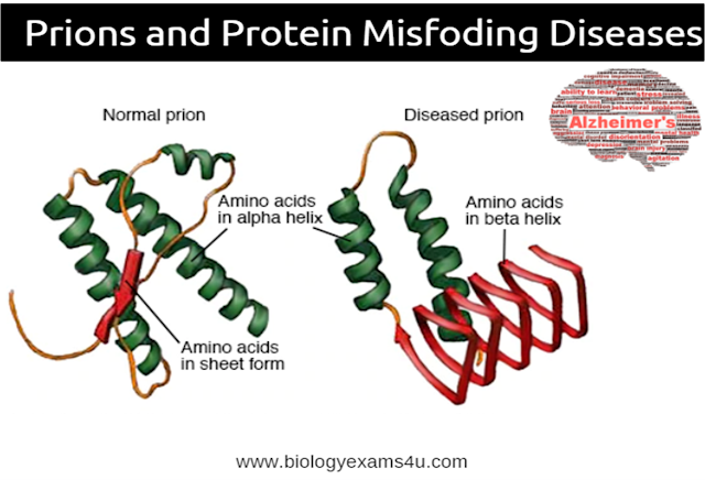 Definition Prions and Protein misfolding Diseases: Alzheimer's disease, Creutzfeld-Jakob disease