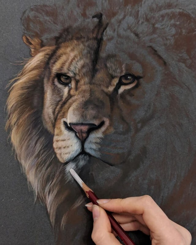 03-Lion-WIP-Tatjana-Bril-Pastel-Drawings-of-Detailed-Animals-www-designstack-co