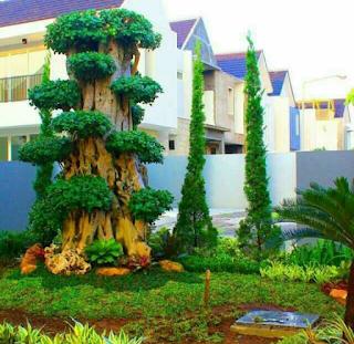 Taman minimais dengan bonsai dollar