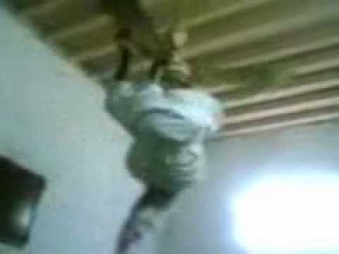 SHOCKING: Federal Polytechnic BAUCHI ND2 Student Hangs himself over.....