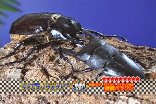 Ground Beetles My House