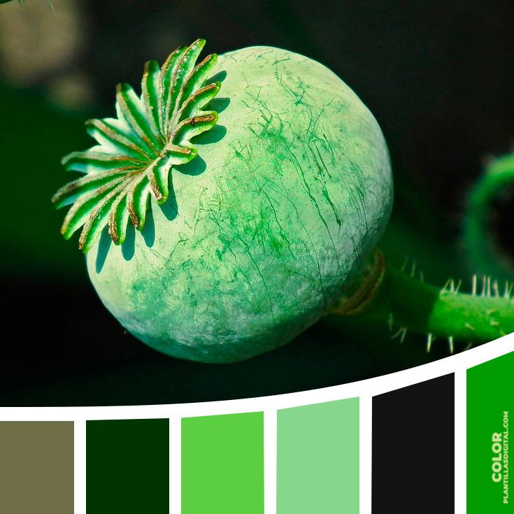 color_80