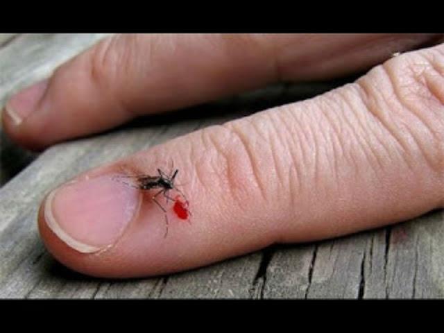 دراسة علمية تؤكد ان البعوض يختار ضحاياه بالفعل ؟؟ تعرف من هم الاشخاص الاكثر عرضه له