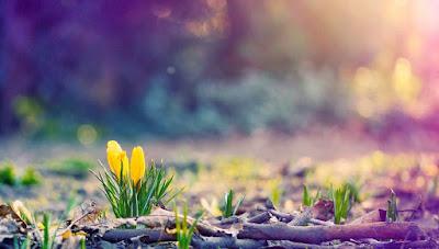Dù cuộc sống có bị vùi dưới lớp cát dày, hãy vươn lên làm một bông hoa rực rỡ, ngát hương