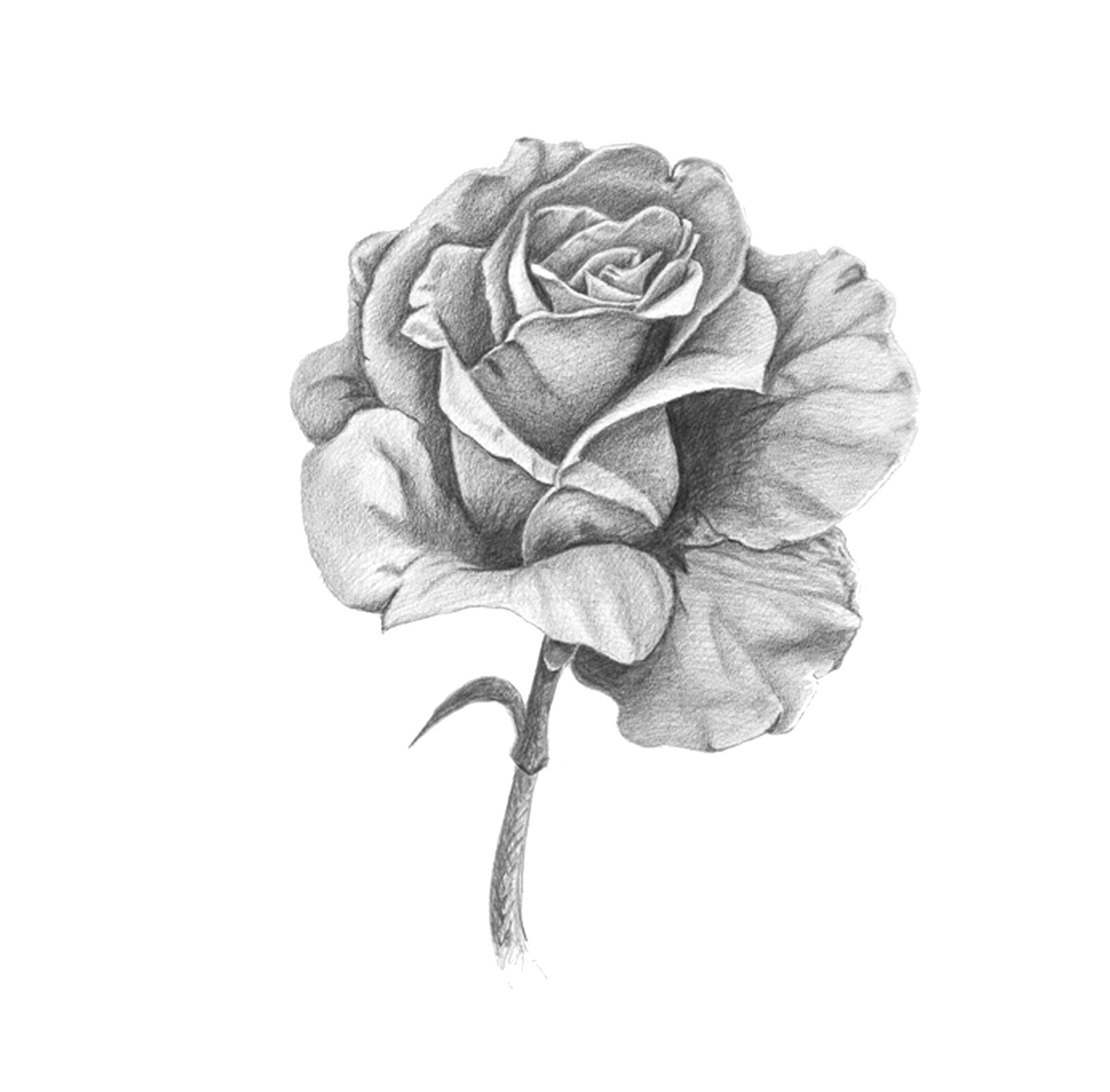 Como Dibujar Rosas Images  Reverse Search
