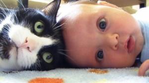 Foto Bayi laki-laki dan anak kucing