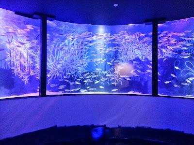 SEaLife Manchester huge circular fish tank aquarium