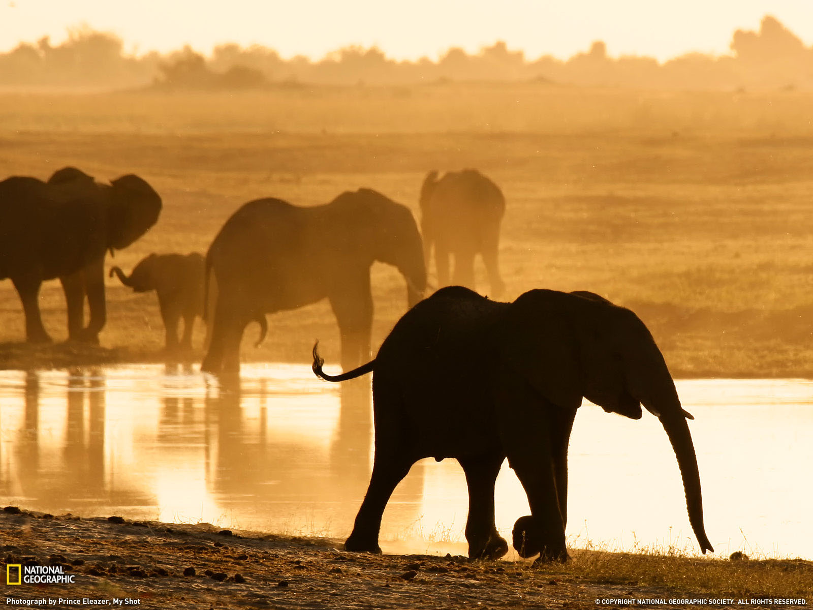 Wallpaper Backgrounds Fall Beautiful Pictures Of Elephant In Hd