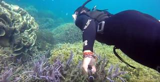 biota laut karimunjawa