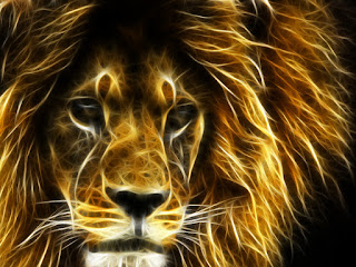 3d hd lion animal best wallpapers