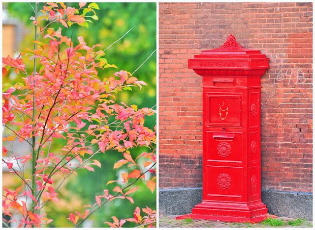 jesienna czerwień