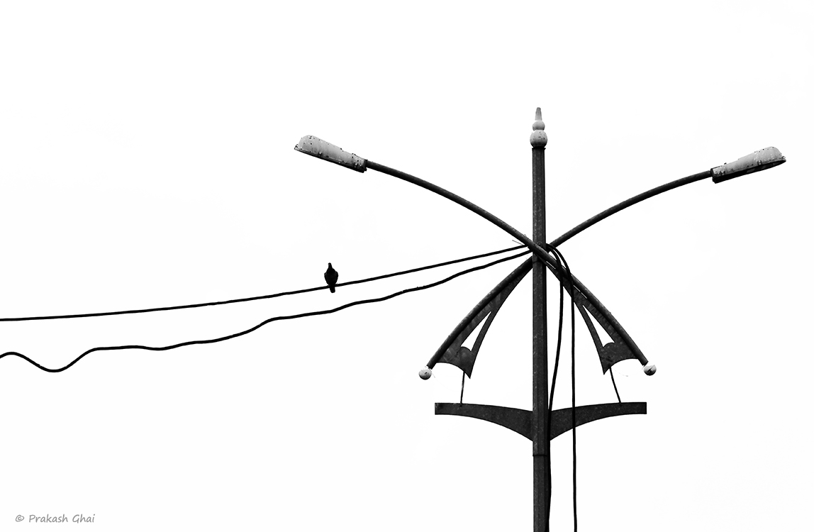 A minimalist photo of A small little bird sitting on a wire next to an X shaped street light.