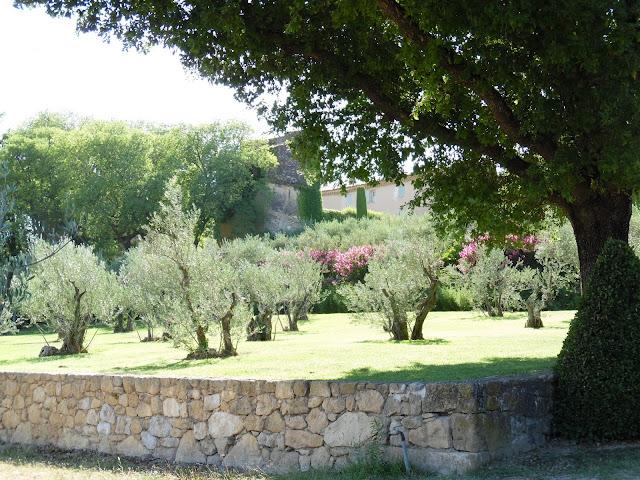 Prowansja, gaj oliwny