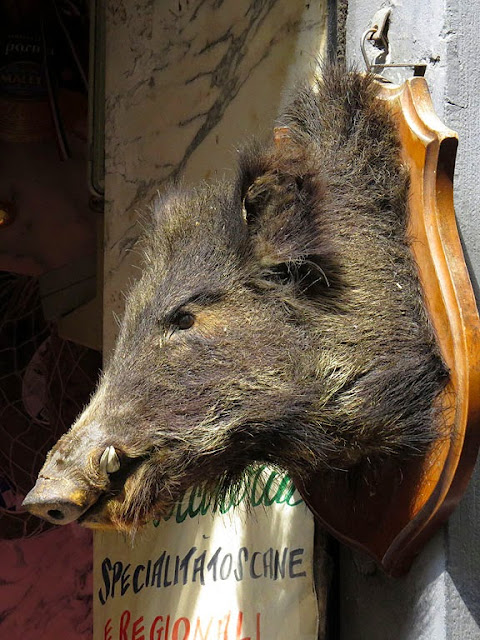 Mounted boar's head, La Norcineria, Pork butcher, Via Sant'Antonino, Florence