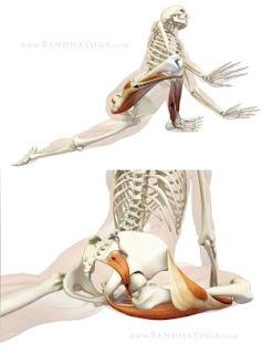 piriformis stretch biomechanics