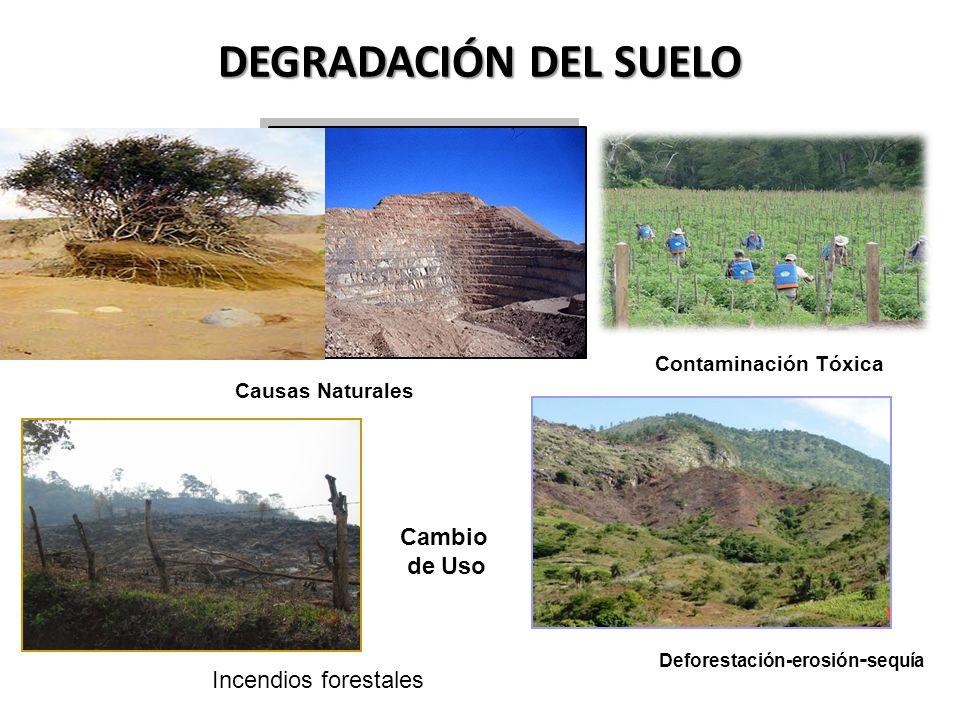 Cuenca hidrografica degradacion de cuencas hidrograficas for Cuales son las caracteristicas del suelo